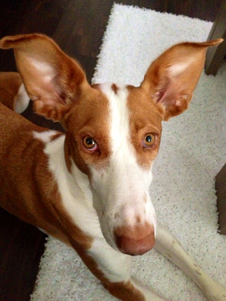 Big Ears..